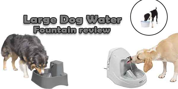 Large Dog Water Fountain Review