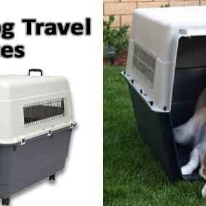 Best Dog Travel Crates