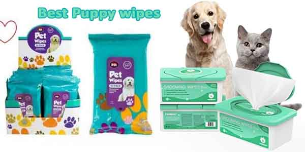 Best puppy wipes