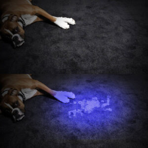 Best-UV-Light-for-Urine-Detection