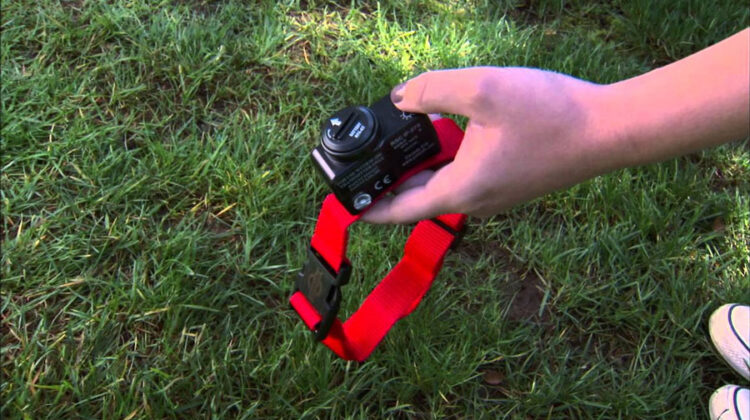 pet safe collars for wireless fencing