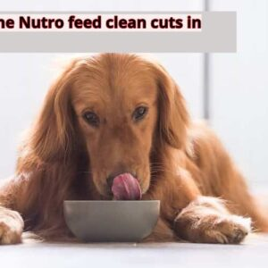 Best one Nutro feed clean cuts in gravy