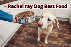 Best Rachel ray large breed dog food