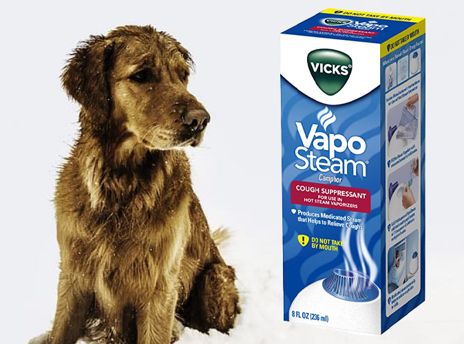 Is Vicks Vaposteam safe for Dogs: find out