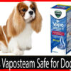 Is-Vicks-Vaposteam-safe-for-Dogs