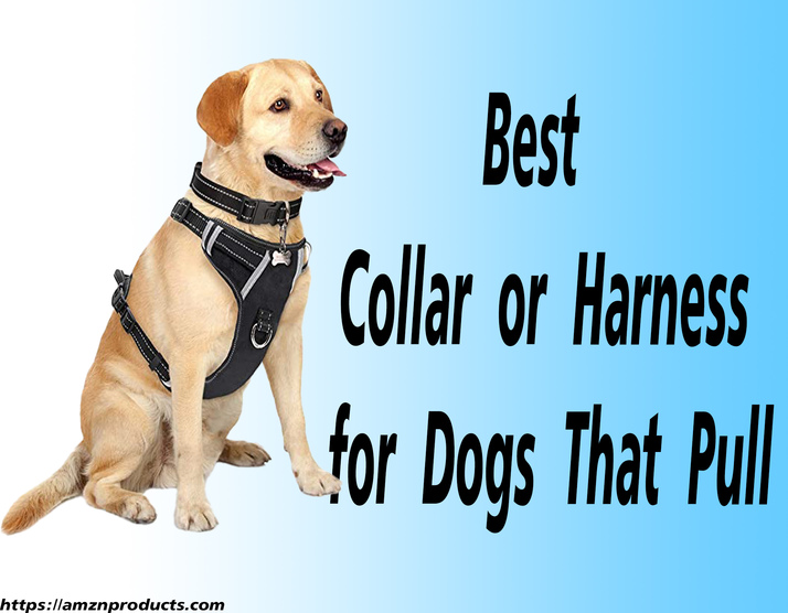 Best Collar or Harness for Dogs That Pull