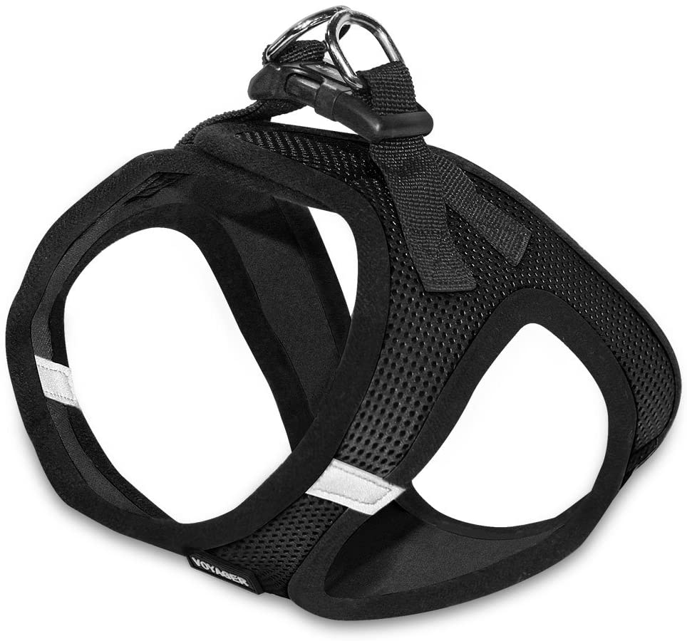 3 Best Collar or Harness for Dogs That Pull to Control any dog