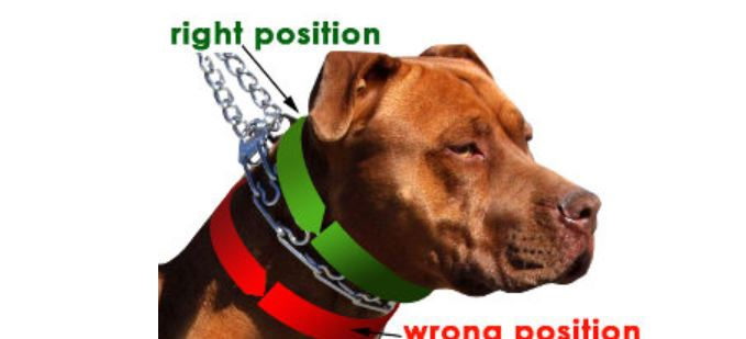 how should you place a Herm Sprenger prong collar on a dog-Find out