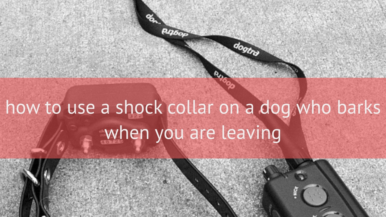 how to use a shock collar on a dog who barks when you are leaving