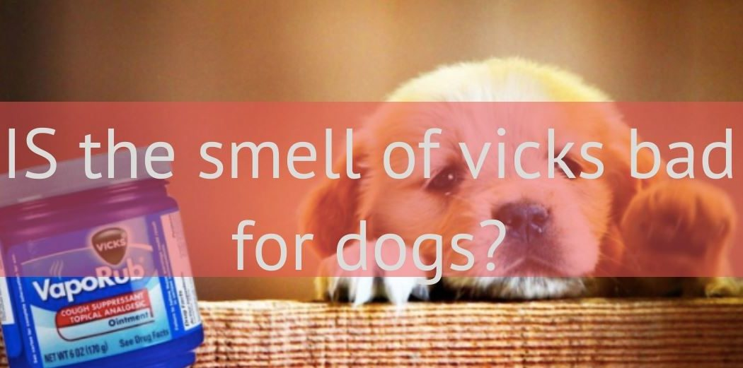 is the smell of vicks bad for dogs