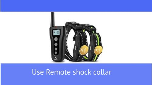 Use Remote Shock Collar when you are leaving: